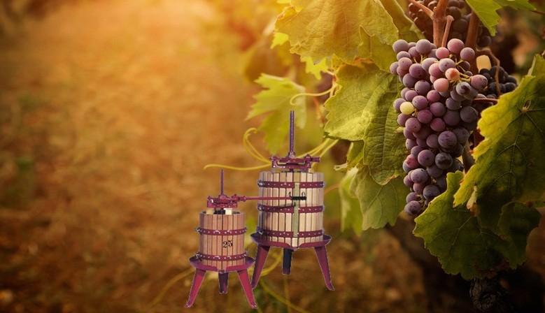 Utilaje vinificație